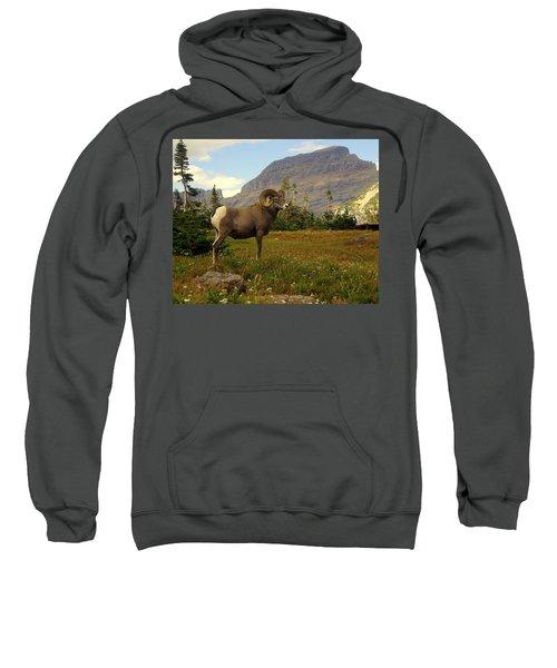 Master Of His Domain Sweatshirt
