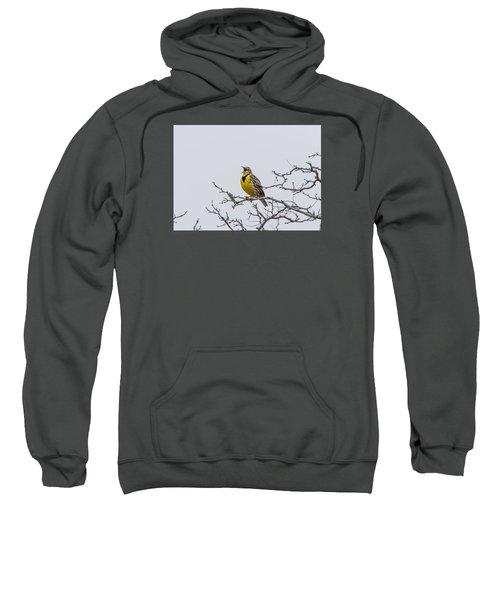 Meadowlark In Tree Sweatshirt by Marc Crumpler