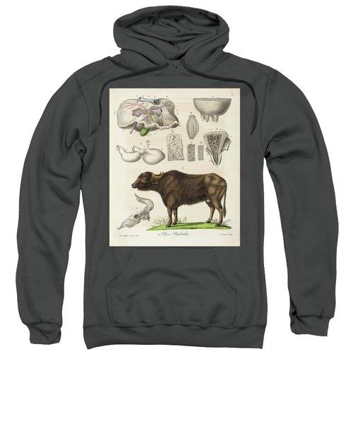 Medical Zoology Or Fair Presentation Sweatshirt