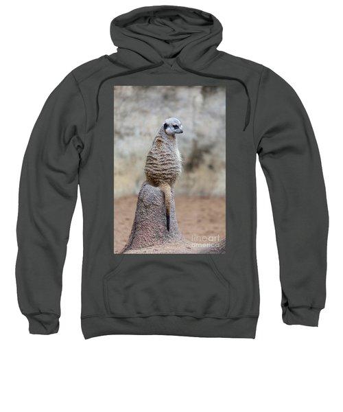 Meerkat Sitting And Looking Right Sweatshirt