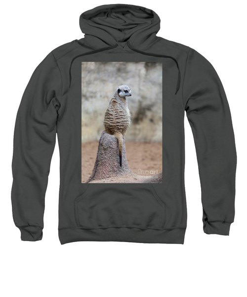 Meerkat Sitting And Looking Right Sweatshirt