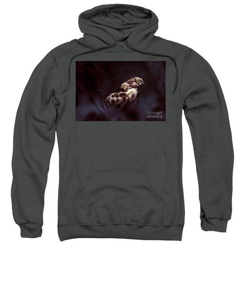 Midnight Hawk Sweatshirt