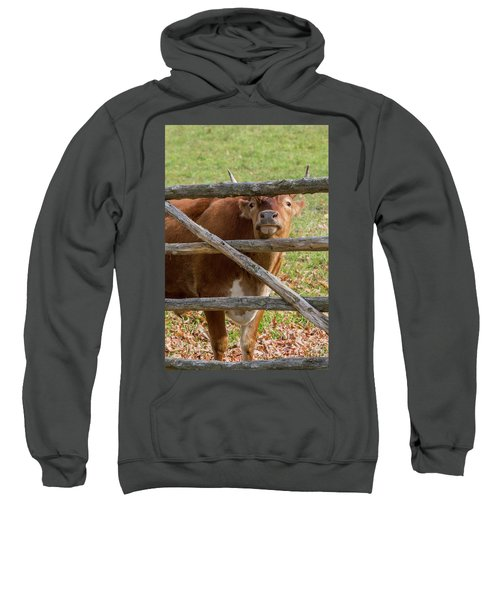Sweatshirt featuring the photograph Moo by Bill Wakeley