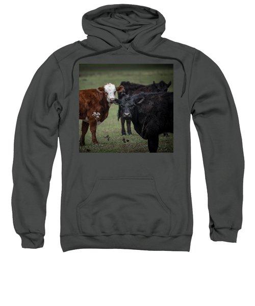 Moo Sweatshirt