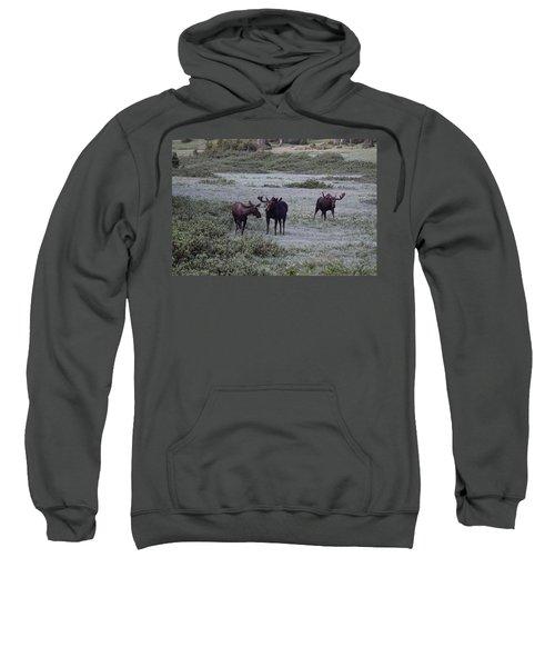 Moose Cameron Pass Co Sweatshirt