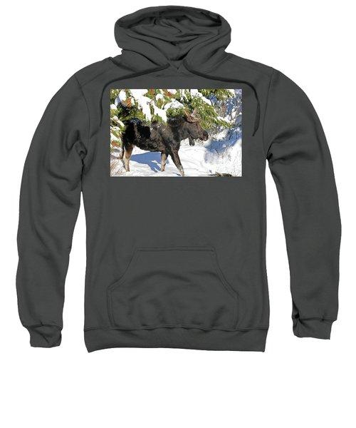 Moose In Snow Sweatshirt