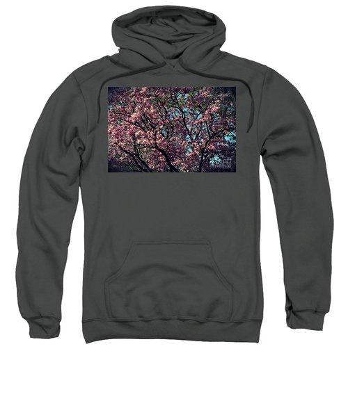 Morning Lit Magnolia Sweatshirt