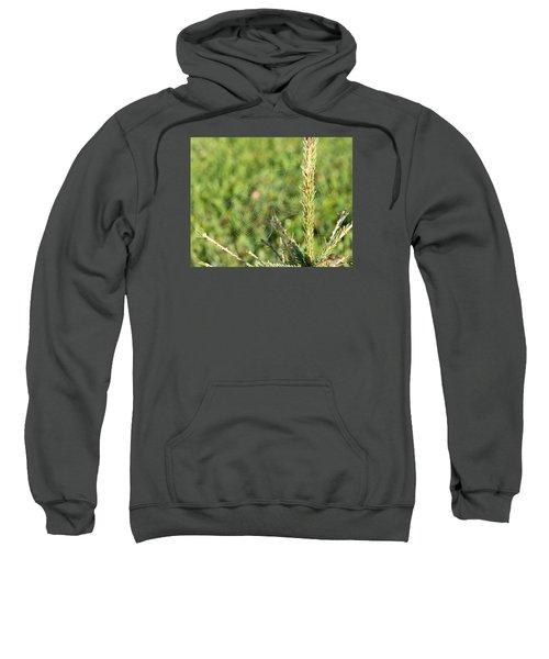 Morning Web #2 Sweatshirt