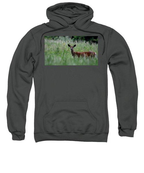 Morninng Deer Sweatshirt