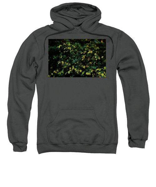 Moss In Colors Sweatshirt