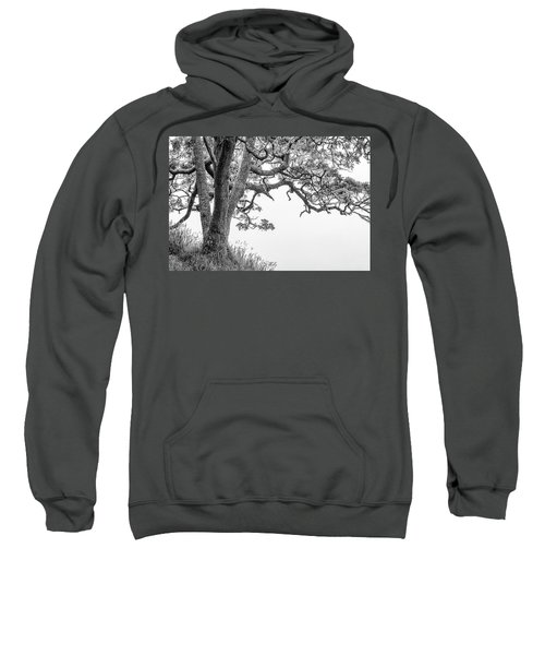 Mossy Tree Sweatshirt