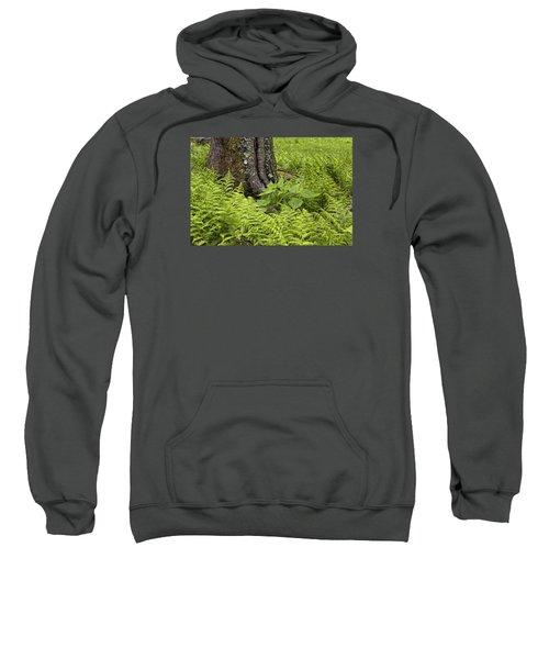 Mountain Green Ferns Sweatshirt