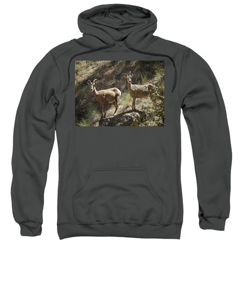 Mountain Sheep Sweatshirt