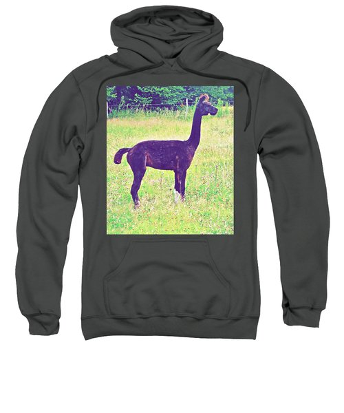 Mr Alpaca Sweatshirt