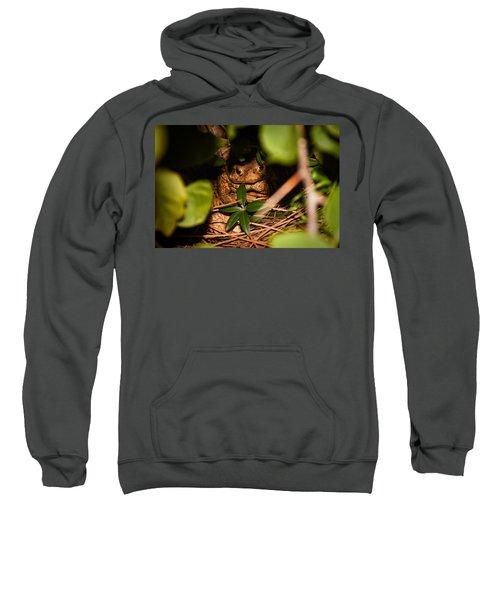 Mr Frog Sweatshirt