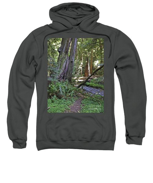 Muir Woods Beauty Sweatshirt