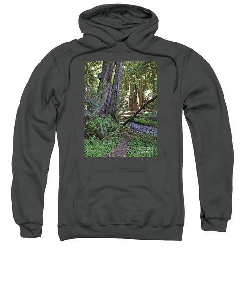 Muir Woods Beauty Sweatshirt