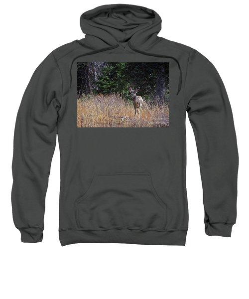 Mule Deer In Utah Sweatshirt