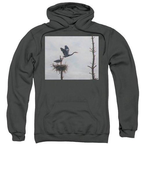 Nesting Great Blue Heron Sweatshirt