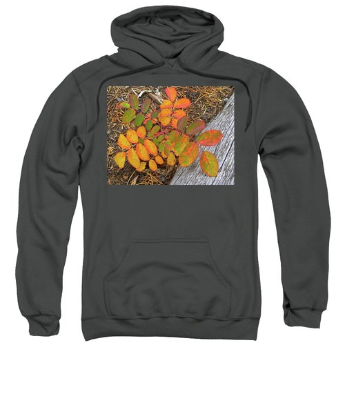 New And Old Life Cycles Sweatshirt