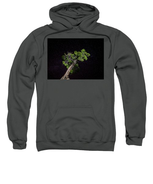 Night Tree Sweatshirt