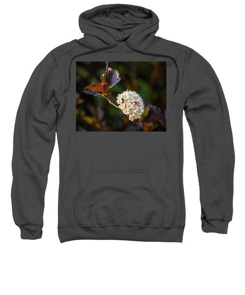 Ninebark Summer Wine Sweatshirt
