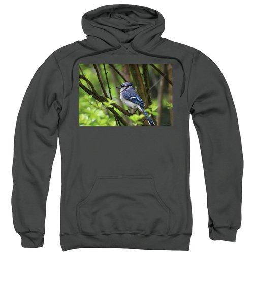 Northern Blue Jay Sweatshirt