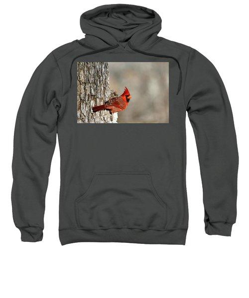 Northern Cardinal On Tree Sweatshirt