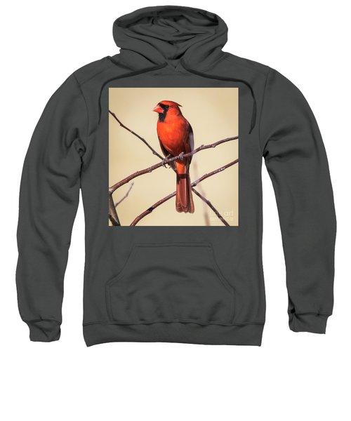 Northern Cardinal Profile Sweatshirt by Ricky L Jones