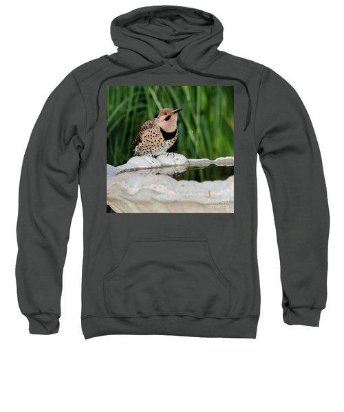 Northern Flicker Drinking Sweatshirt