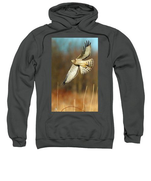 Northern Harrier Banking Sweatshirt