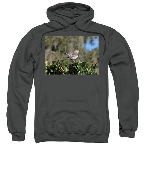 Northern Mockingbird Sweatshirt by Carol Groenen
