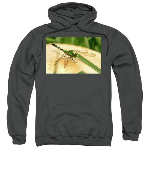 Odonate On Mushroom With Grass Blade Sweatshirt