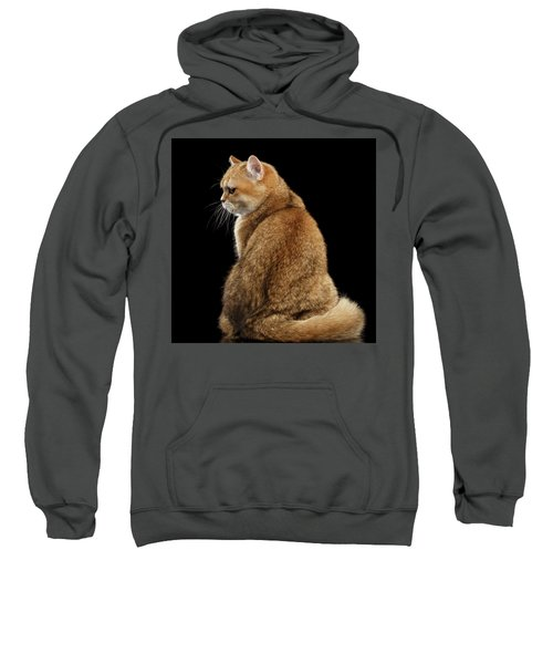 offended British cat Golden color Sweatshirt
