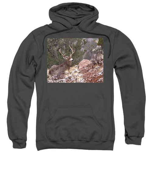 Old Buck Sweatshirt