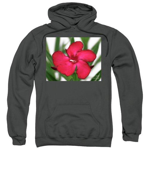 Oleander Blood-red Velvet 1 Sweatshirt