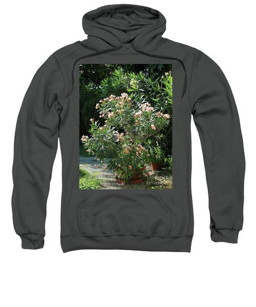Oleander Petite Salmon 4 Sweatshirt