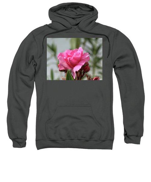 Oleander Splendens Giganteum 2 Sweatshirt