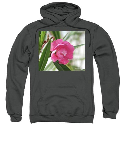 Oleander Splendens Giganteum 3 Sweatshirt