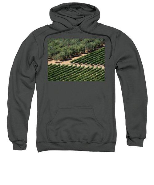 Olive Grove Meets Vineyard Sweatshirt
