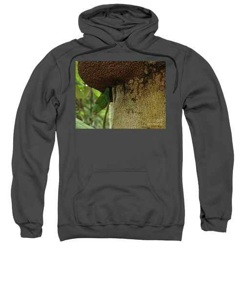 Orange -chinned Parakeet  On A Termite Mound Sweatshirt