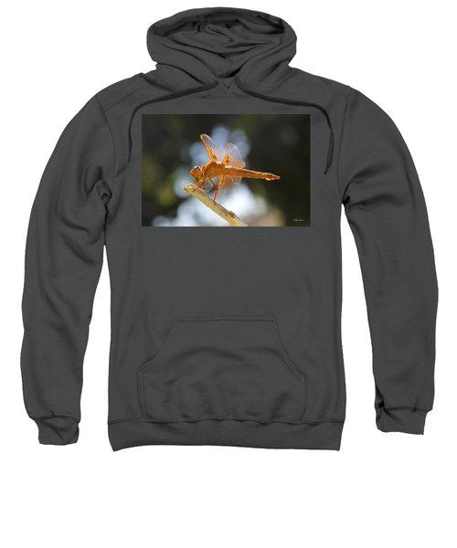 Orange Dragonfly Sweatshirt