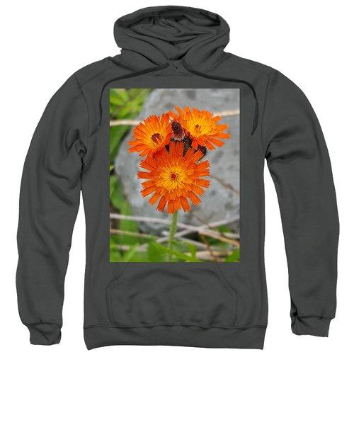 Orange Hawkweed Sweatshirt