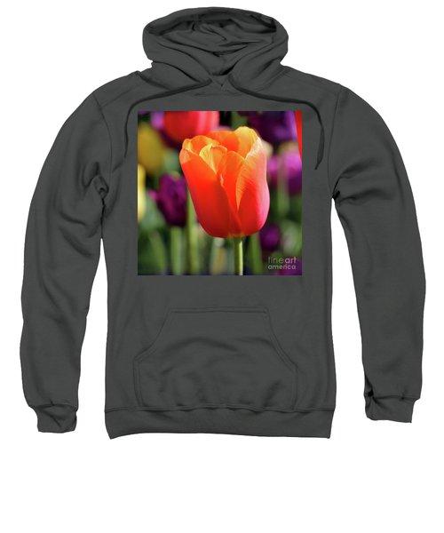 Orange Tulip Square Sweatshirt