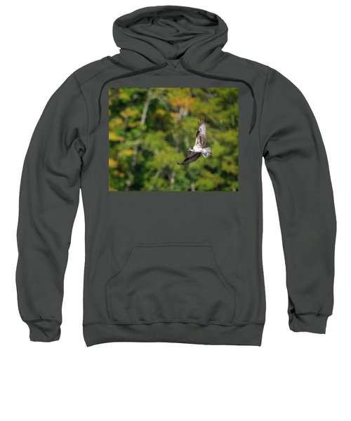 Osprey Sweatshirt by Bill Wakeley