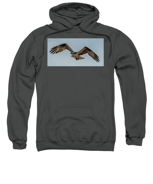 Osprey Flying Sweatshirt