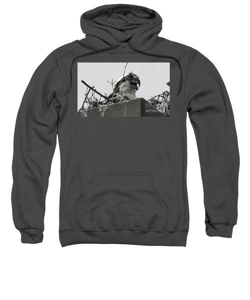 Osprey In Nest Sweatshirt