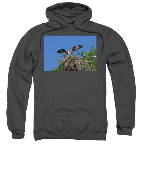 Osprey On Nest Wings Held High Sweatshirt
