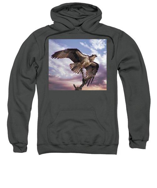 Osprey Wing Sweatshirt