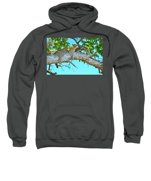 Out On A Limb Sweatshirt